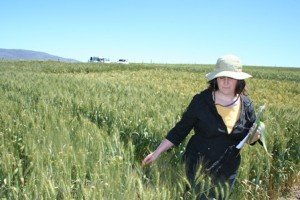 Ida Paul inspecting a wheat field crop