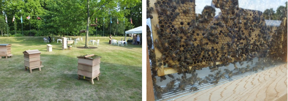 (left) Bee hives on the lawn of Marlborough House; (right) An observation hive with a colony of bees
