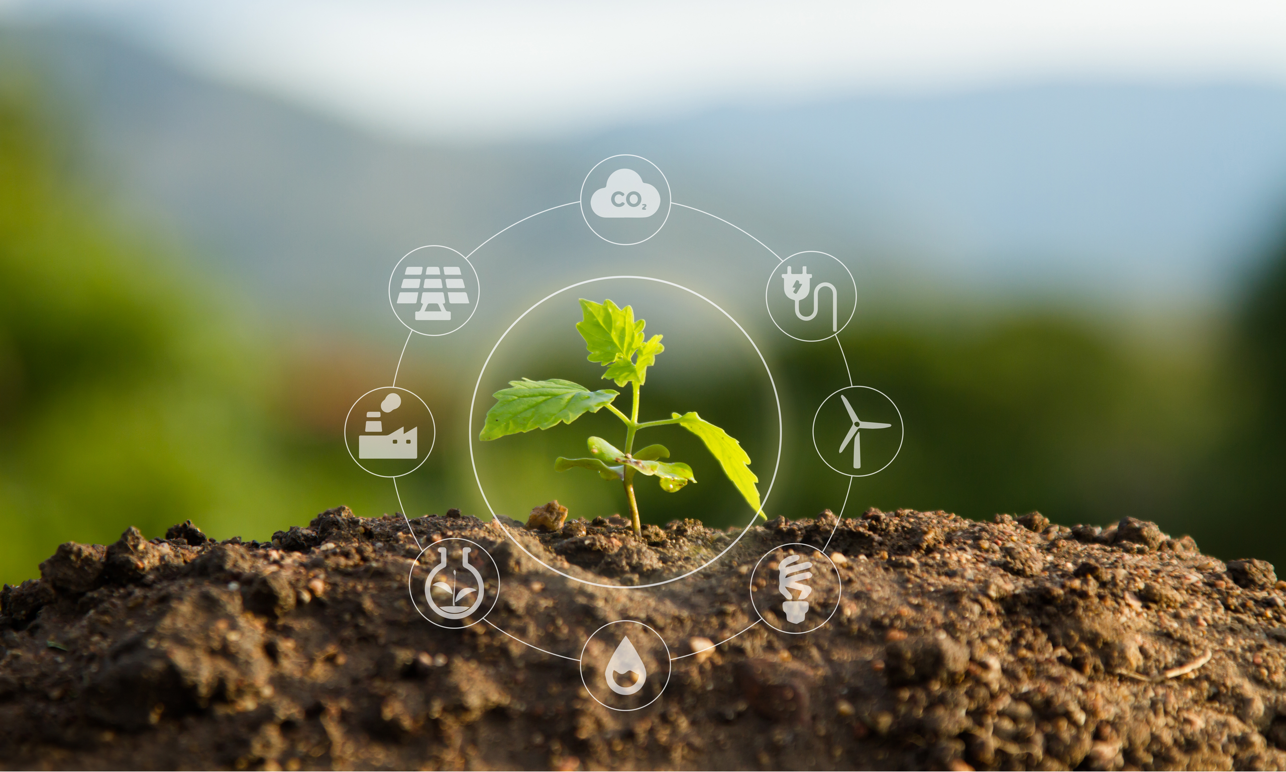 Seedling growing in soil mound surrounded by sustainable energy icons.