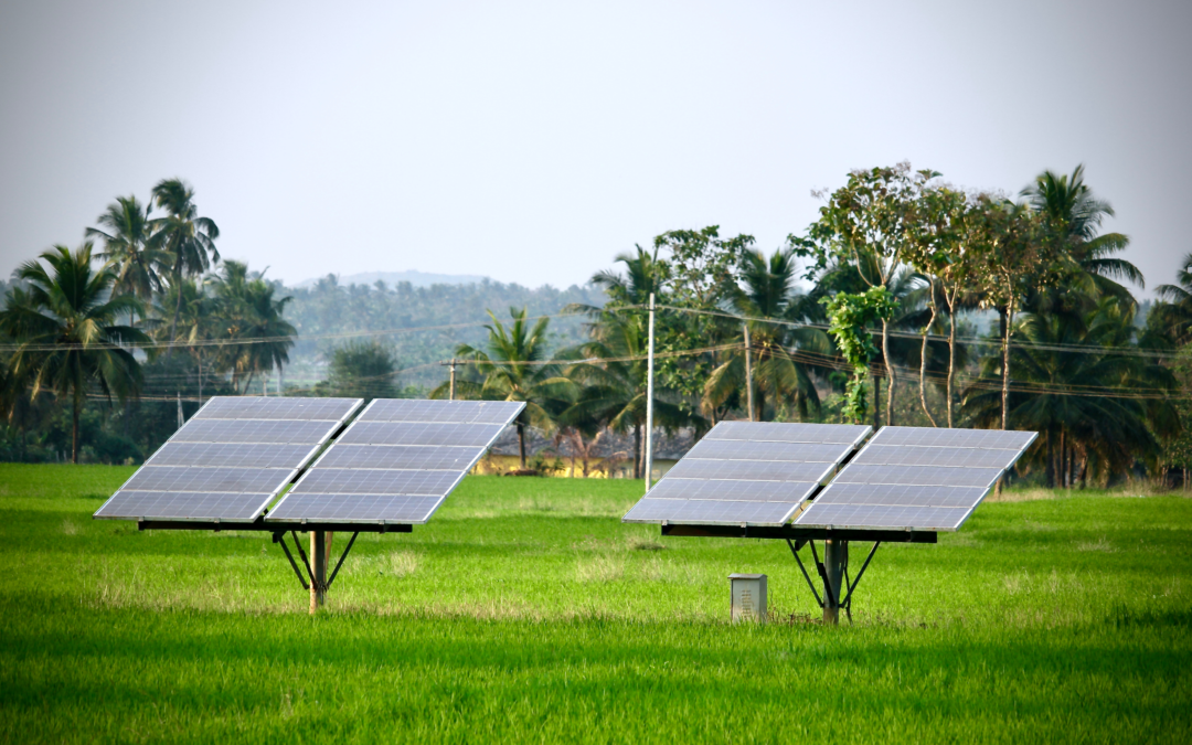 Solar panels in grassland with trees in background.